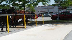 Horse Parking 3